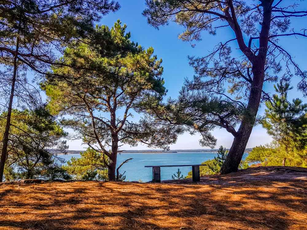 20190914_134829 Brownsea Island and The Red Squirrels