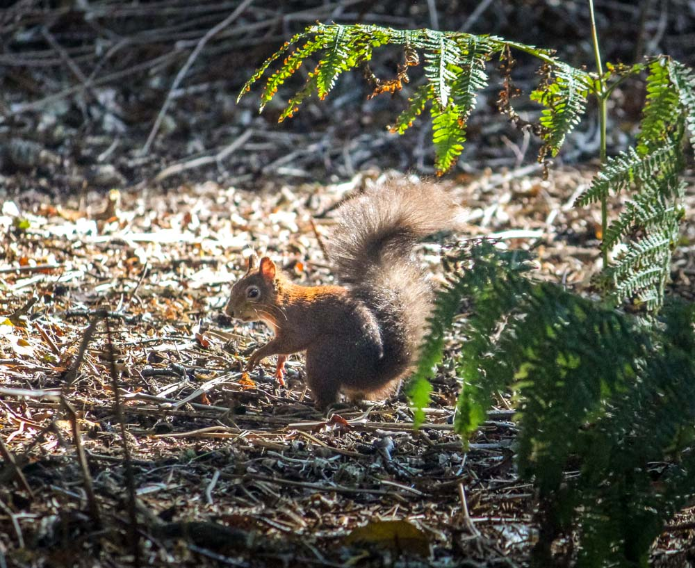 IMG_7232 Brownsea Island and The Red Squirrels