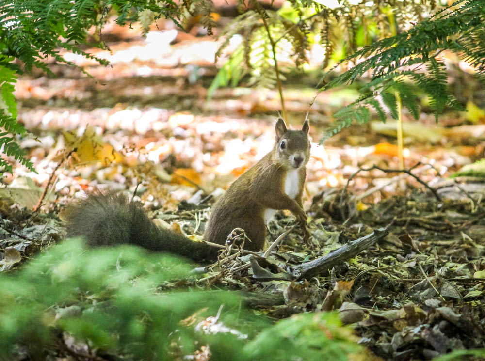 IMG_7247 Brownsea Island and The Red Squirrels