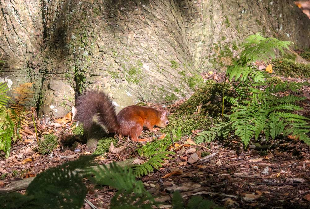IMG_7276 Brownsea Island and The Red Squirrels