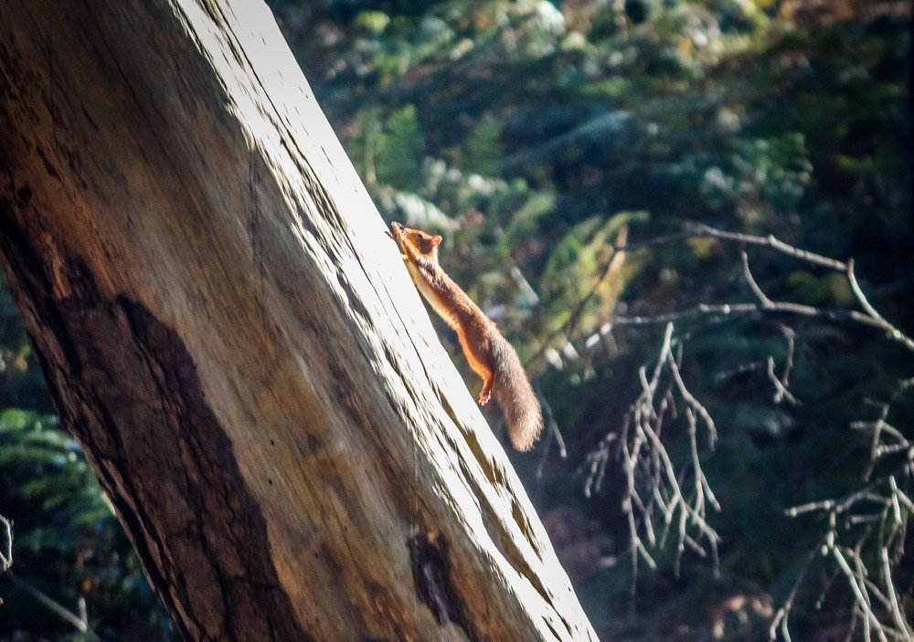 Brownsea Island and The Red Squirrels
