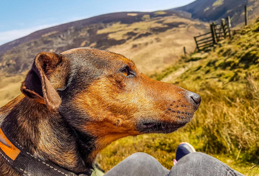 Lunch-time-picnic-with-Bandit Torside And Woodhead Reservoir Walks – North Derbyshire