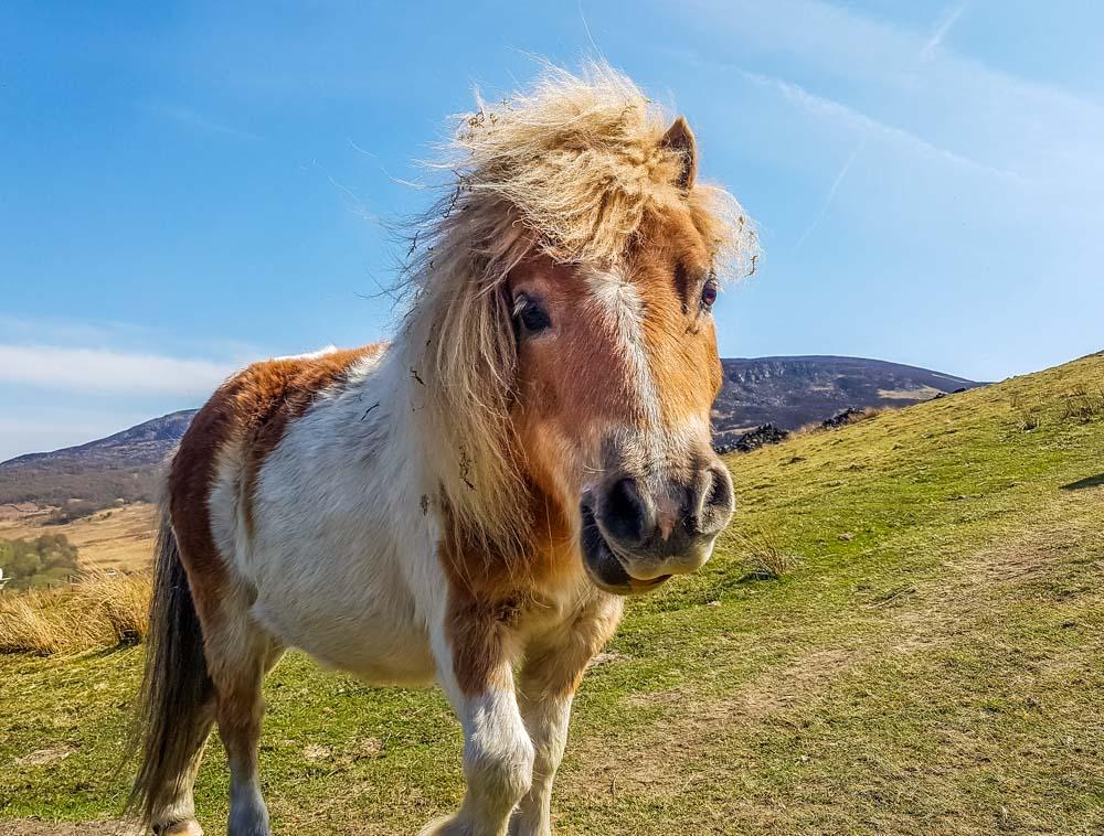 Mini-Pony Torside And Woodhead Reservoir Walks – North Derbyshire