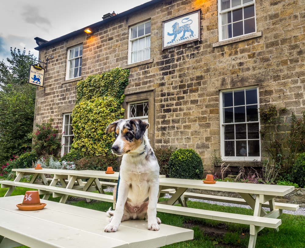 The Blue Lion Inn – Dog Friendly Bliss In Wensleydale