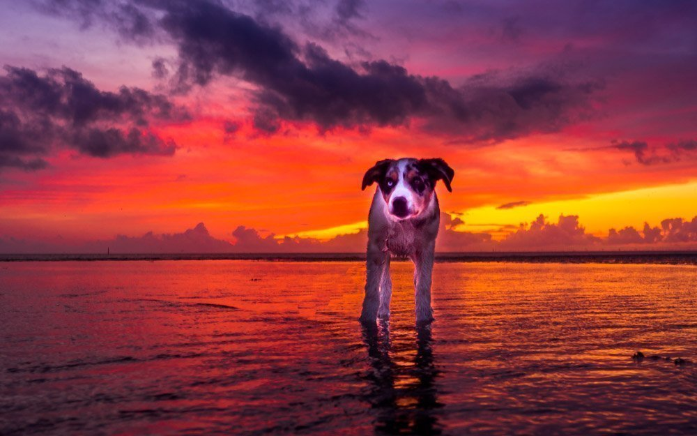 Rossall Point, Fleetwood - Sunsets, Scenes and Dog Walks 1