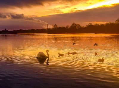 Attenborough Nature Reserve, A Nottinghamshire Treasure