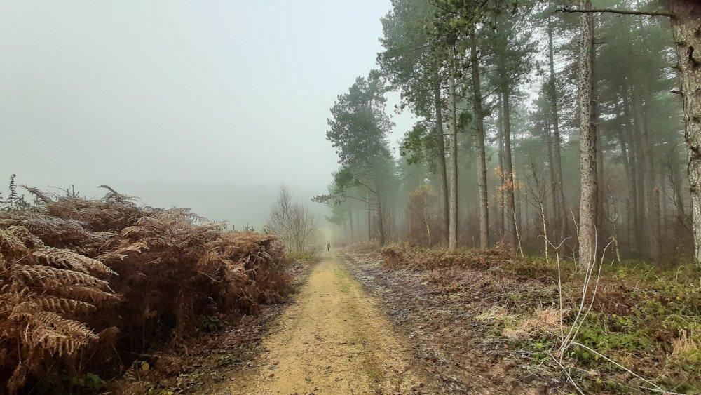 Woodland Walking in Calverton – Nottinghamshire