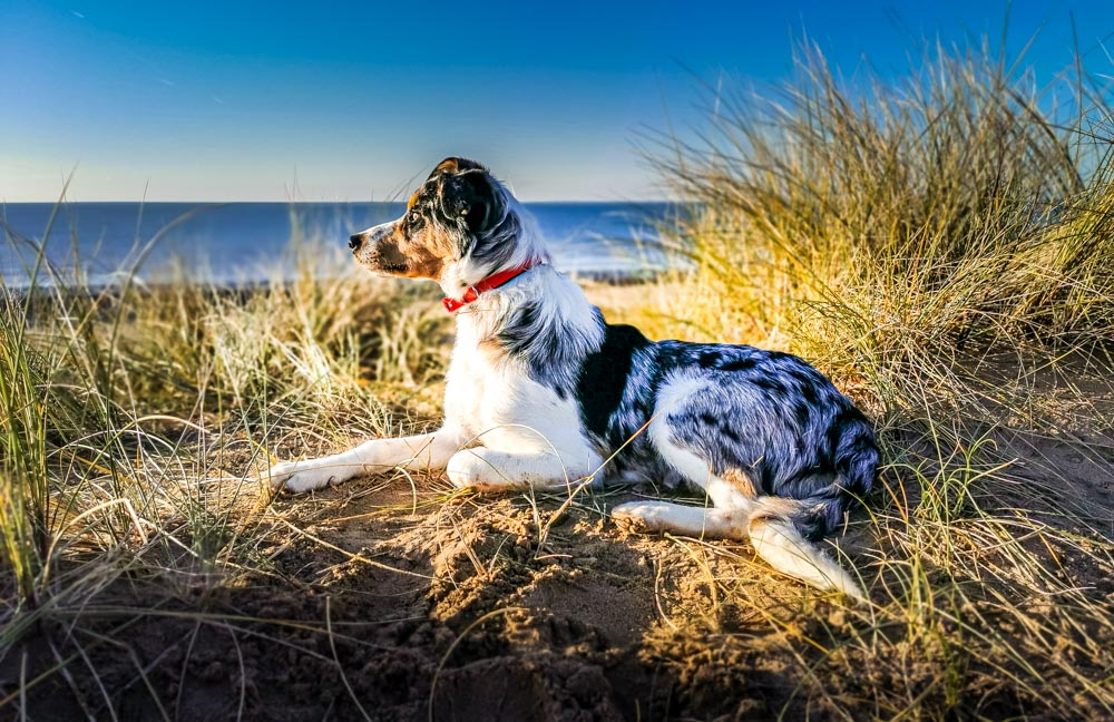 St Annes Sand Dunes, Dog Walks And Views
