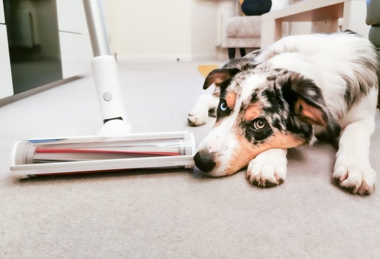 Banishing Pet Hair With The Roidmi S1 Cordless Vacuum Cleaner