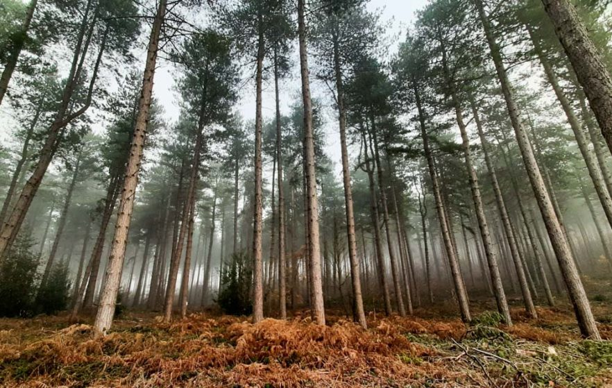 Woodland Walking in Calverton