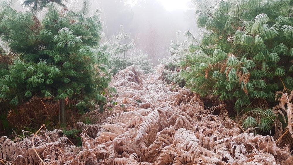 frosty and misty