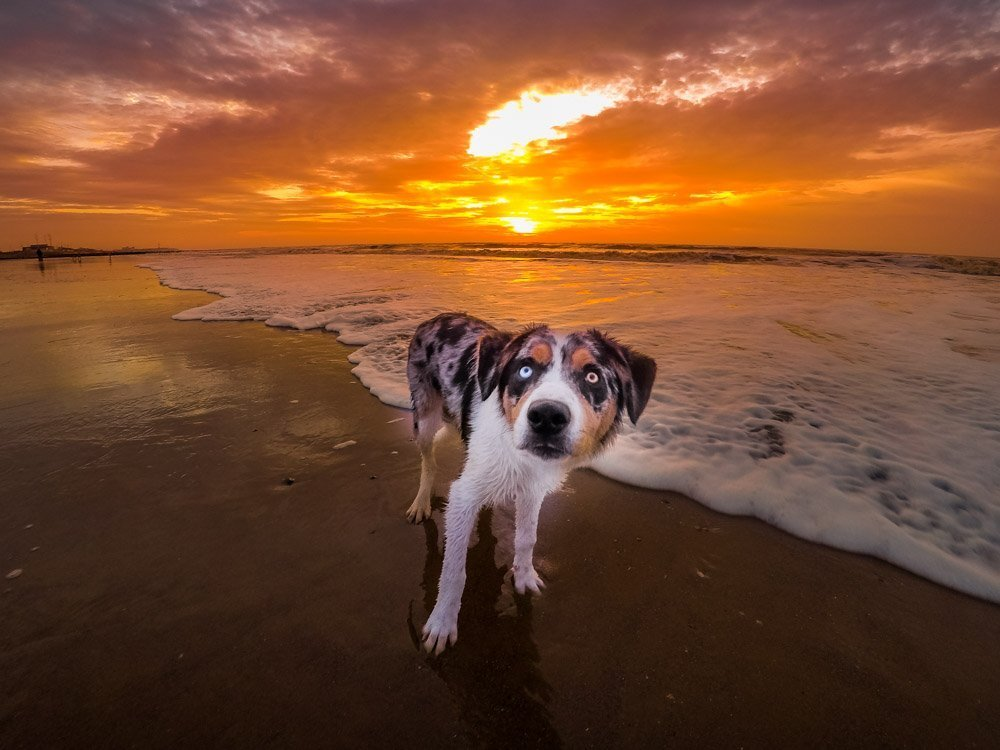 G0211061 Cleveleys & Rossall Beach, Sunrise & Sunset Dog Walks