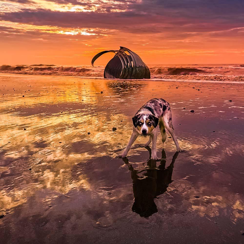 IMG_20191229_145110 Cleveleys & Rossall Beach, Sunrise & Sunset Dog Walks