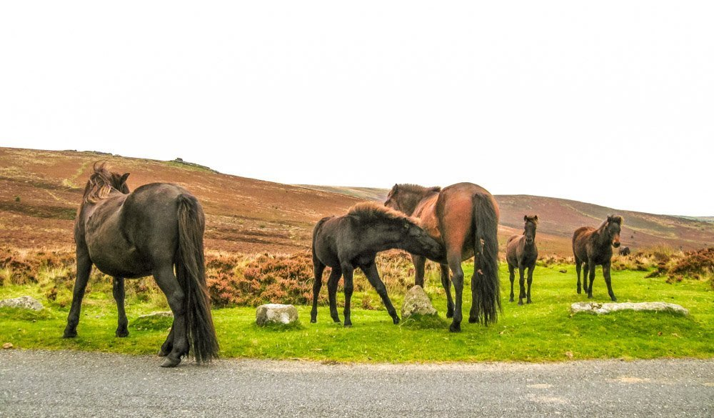 Memories of a Weekend Camping Trip – Dartmoor