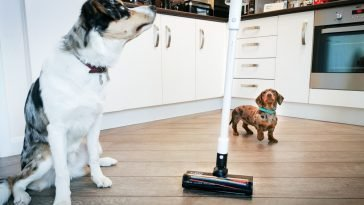 pet hair ROIDMI vacuum cleaner