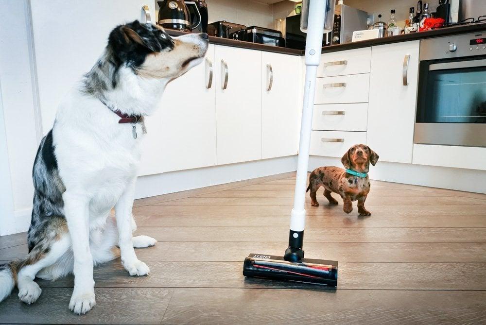 pet hair ROIDMI vacuum cleaner