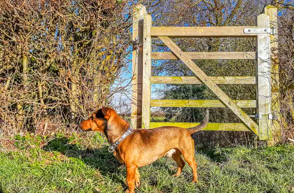 dog by the gate