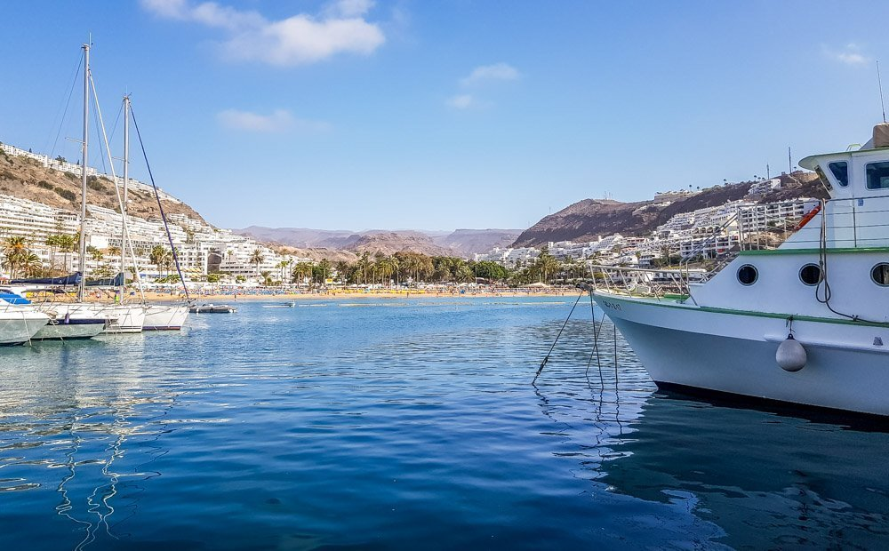 Puerto-Rico Gran Canaria: Dolphin And Whale Watching