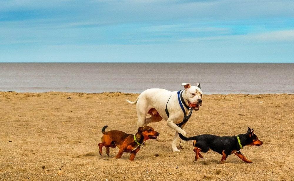 three dogs on the beach