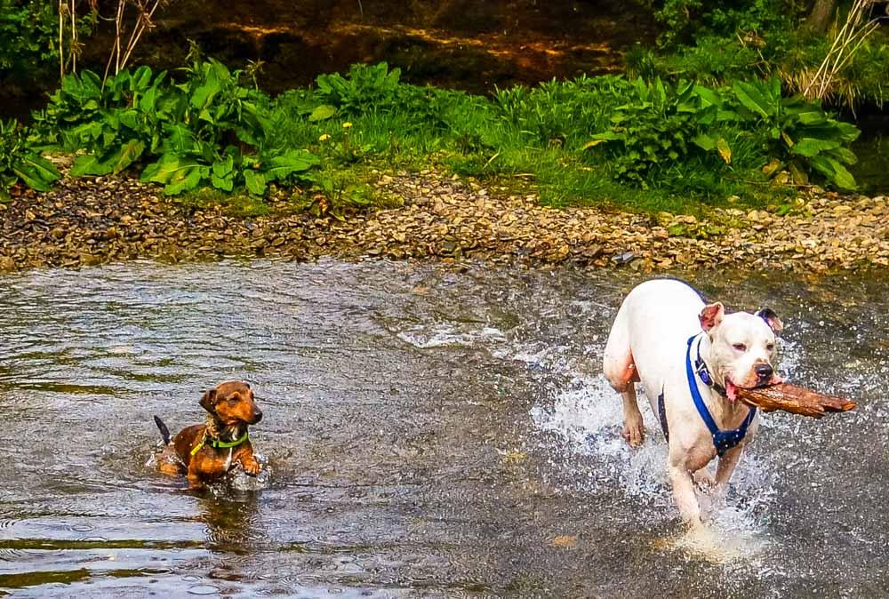 running through the river