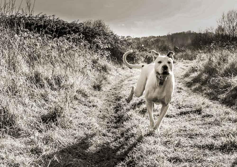 dog having a good run