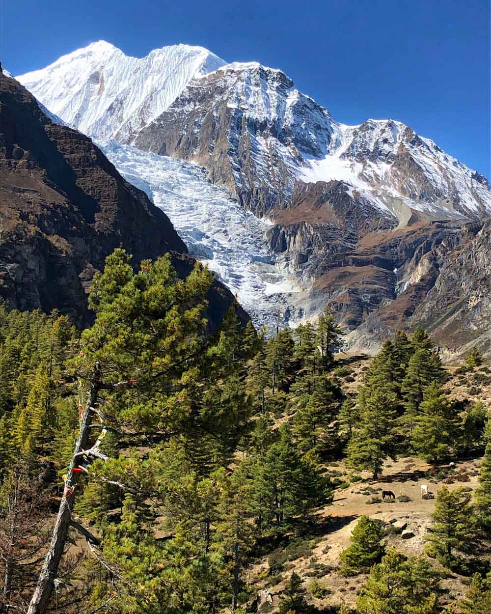 Gangapurna-and-Glacier Annapurna Circuit, Nepal - Part II: Apple Pie to Beyond Acclimatisation