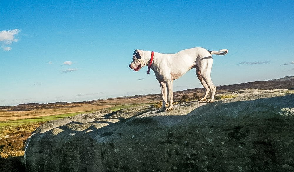 Maximus and His Adventures, A Dog's Tale