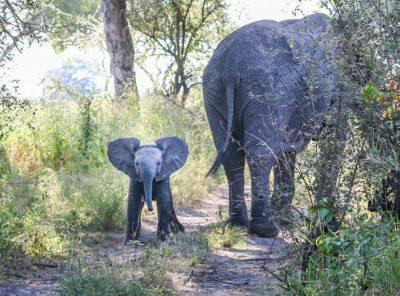 Living The Safari Life Amongst The Wildlife Of Africa