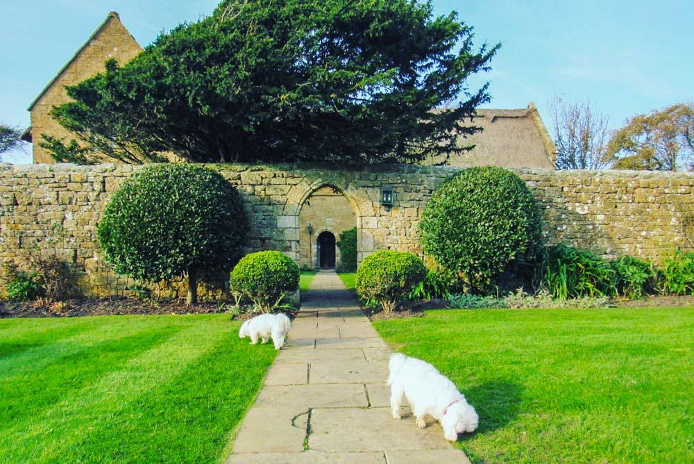 Dog Friendly Stay at Bailiffscourt Hotel