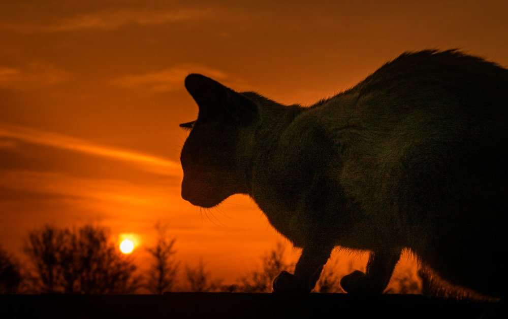 cat-at-sunset 5 Tips For Taking Better Pet Photos
