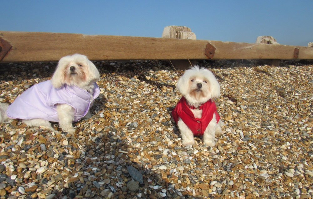 Dog Friendly Stay at Bailiffscourt Hotel, West Sussex