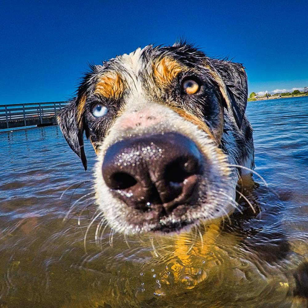 focus-on-dogs-eyes 5 Tips For Taking Better Pet Photos