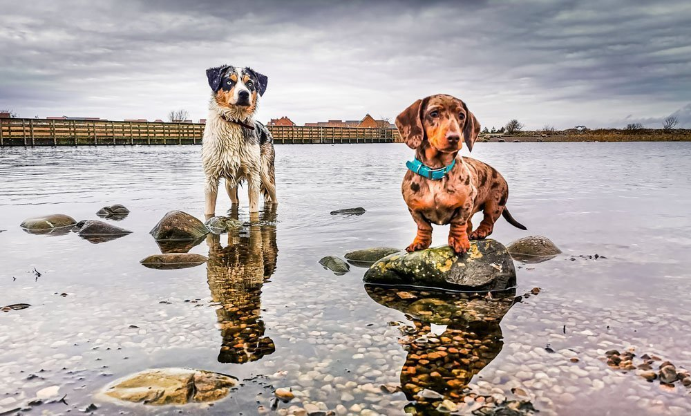 Tips For Taking Better Pet Photos