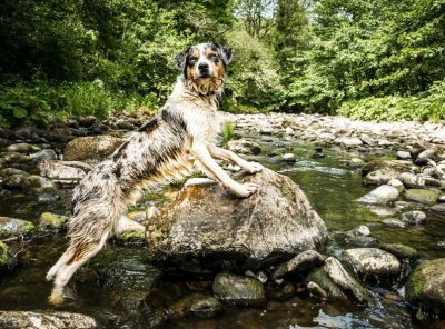A Brock Bottom Dog Walk And Paddle