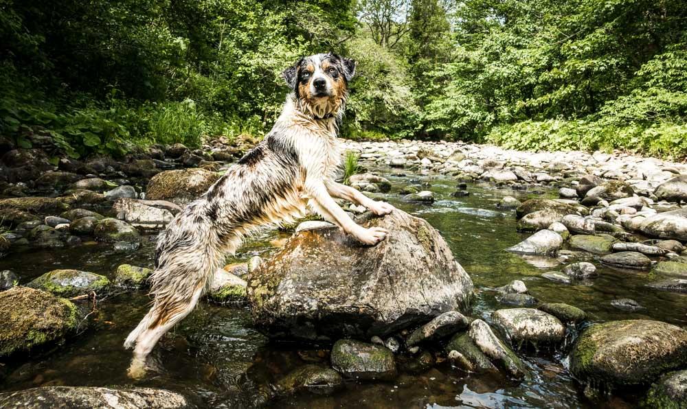 Brock Bottom Dog Walk And Paddle