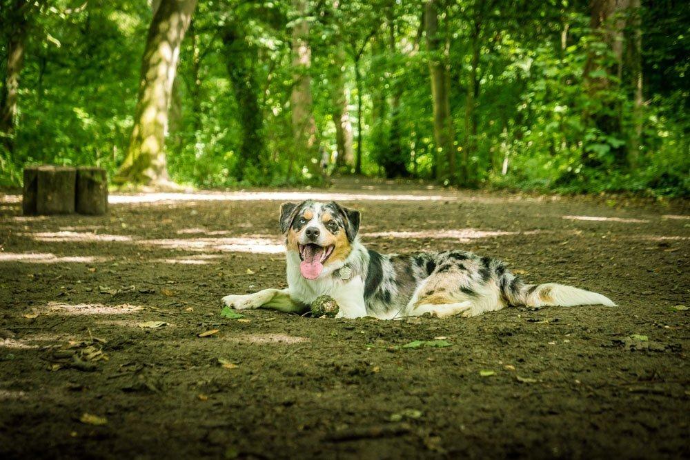 A Dog Walk Through Witch Wood, Lytham
