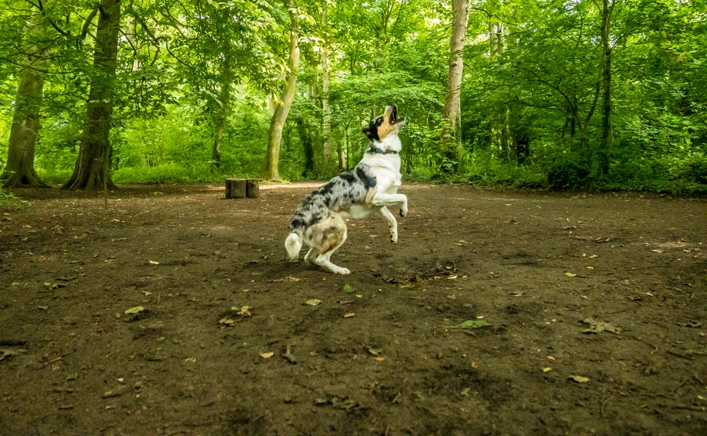 L1005377 A Dog Walk Through Witch Wood, Lytham