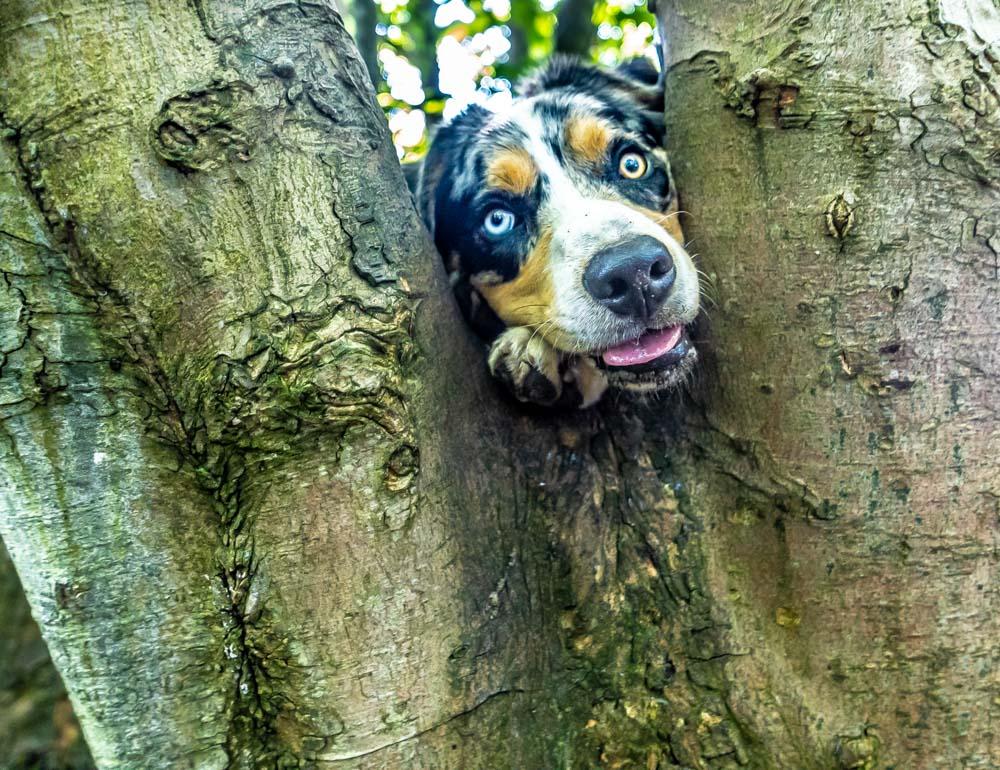 L1005436 A Dog Walk Through Witch Wood, Lytham
