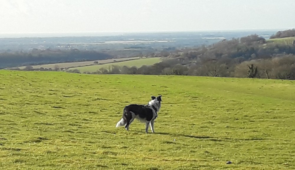 A South Downs Walk - Slindon and The Great Down