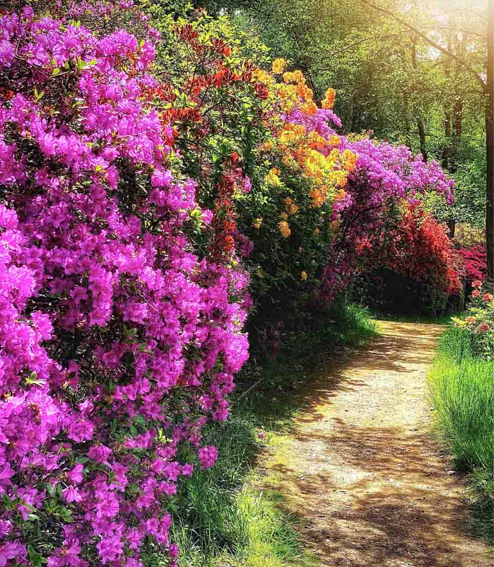 garden-path Virginia Water Lake - A Springtime Walk