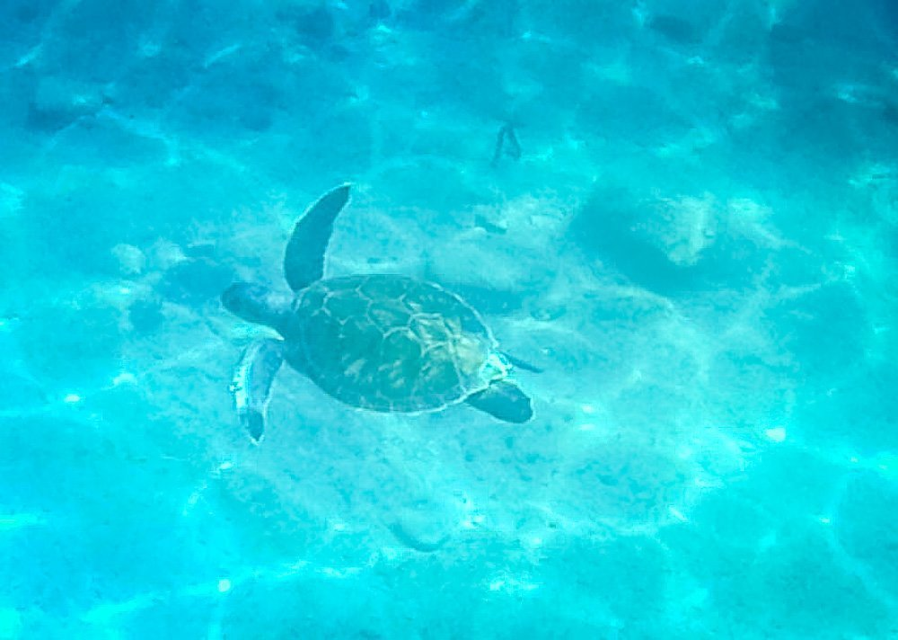 sea-turtle Sail Away On The Aegean Sea With Your Own Private Gulet