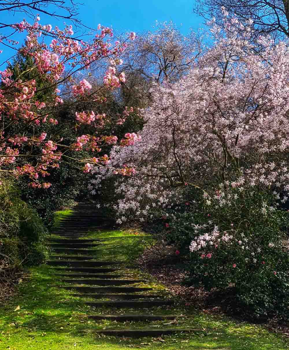 trees Virginia Water Lake - A Springtime Walk