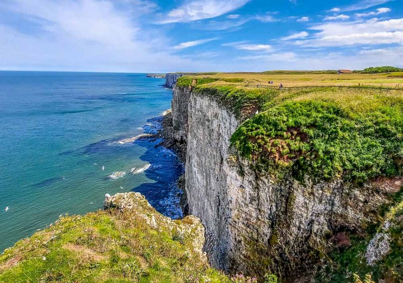RSPB Bempton Cliffs - Puffins and other birds
