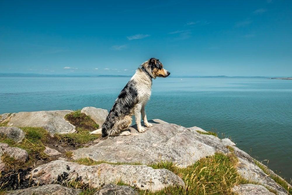 dog friendly cliff walk