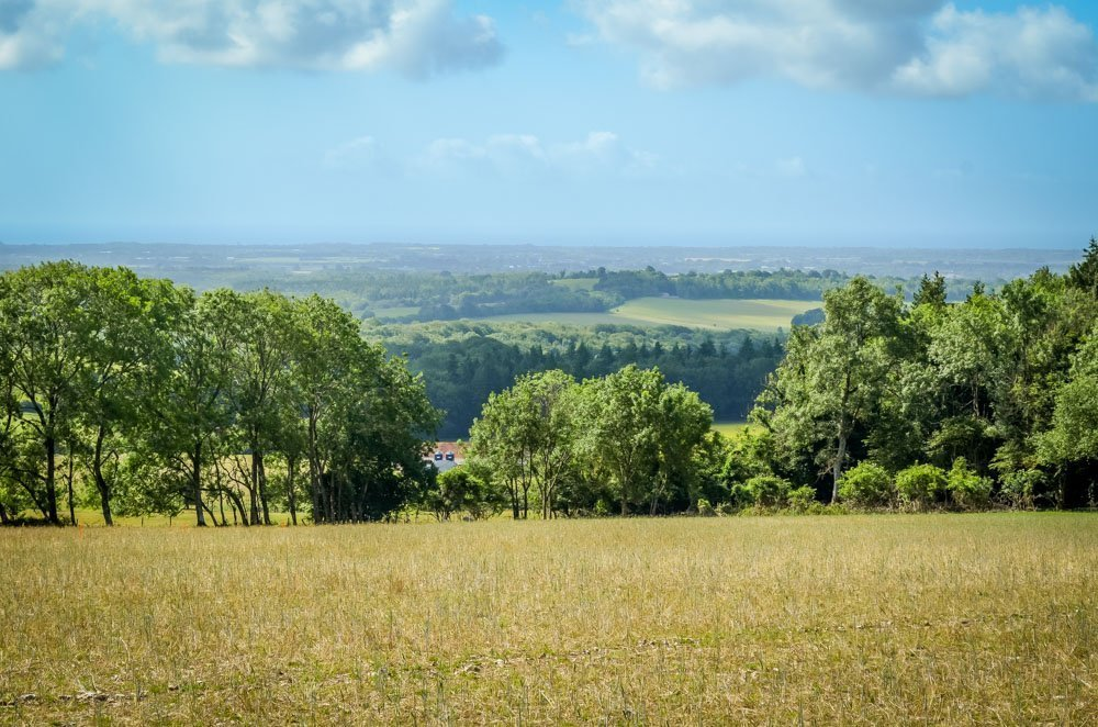 Eartham Woods and Gumber Farm Walk, South Downs