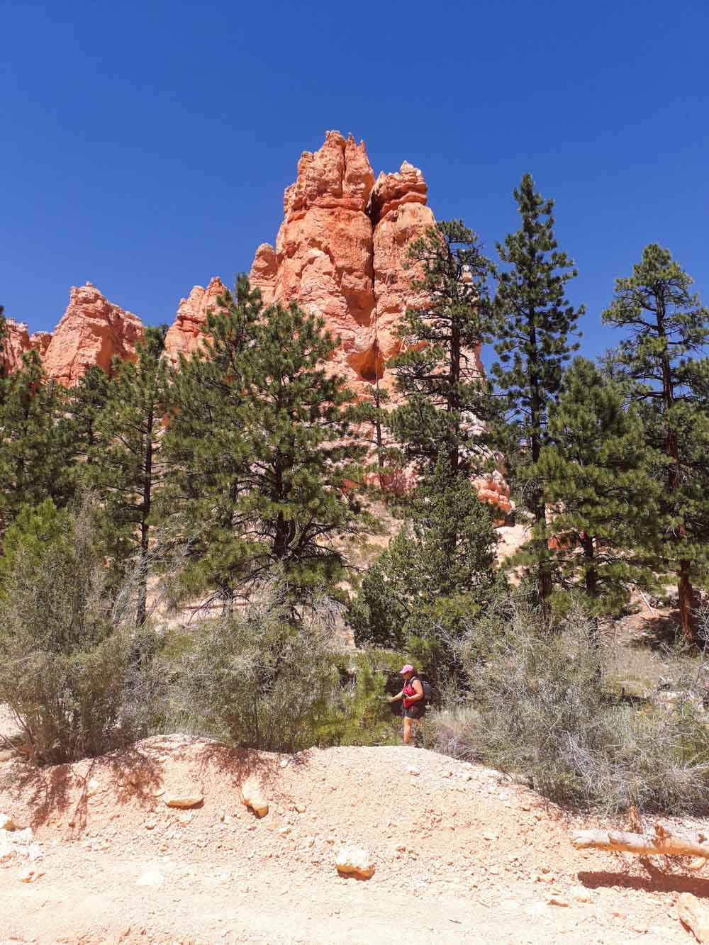 Picture-13 The Hoodoos and Bryce Canyon National Park, Utah