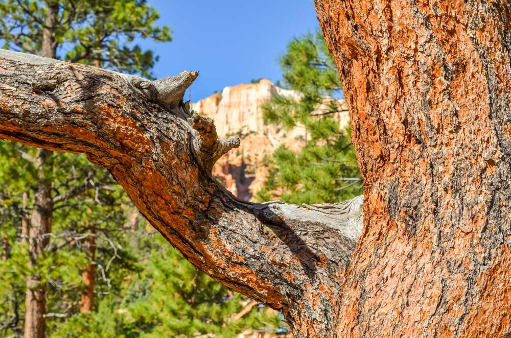 Picture-9 The Hoodoos and Bryce Canyon National Park, Utah
