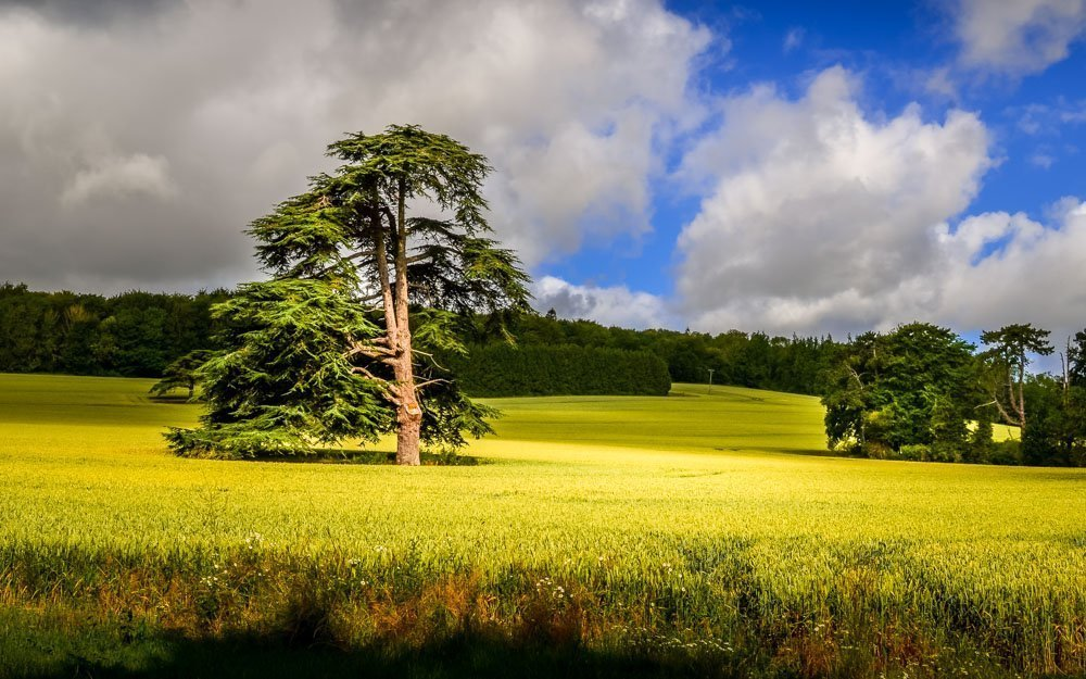 Dale Park and the Great Down Walk, West Sussex