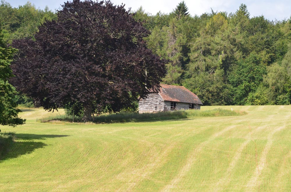old barn nestled beneath a Copper Beech