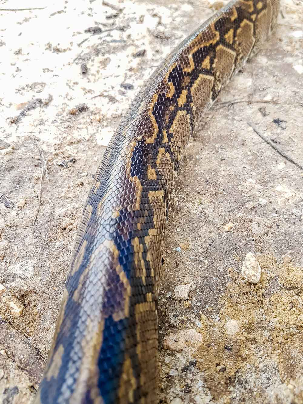 Warming Up To Snakes of Southern Africa